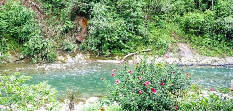 26082016-Bukit Lawang lac