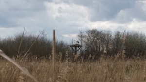 Parc ornithologique nid