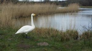 Parc ornithologique signe
