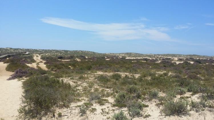 Culatra marche plage 2