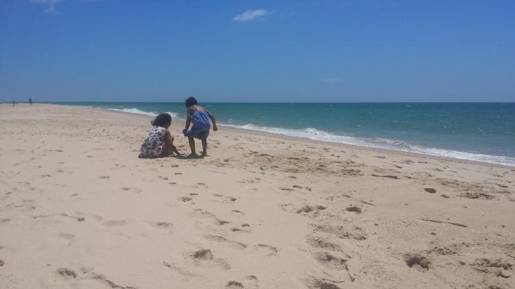 Culatra plage coquillage