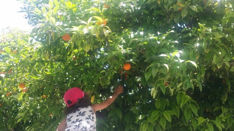 Faro orange 2