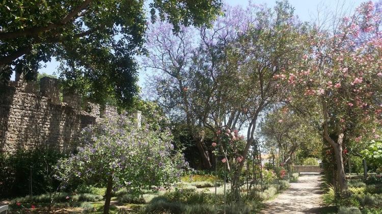 Tavira jardin