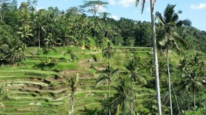 Ubud_Terrace view