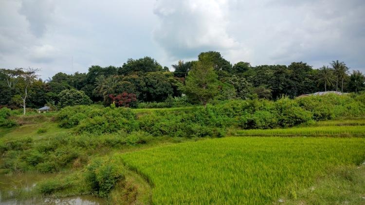 Lac Toba ballade riziere