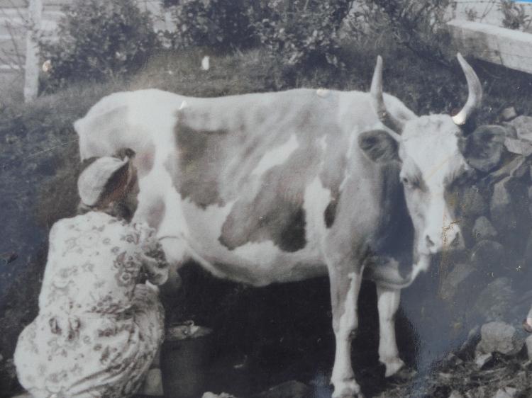skaftafell-ferme