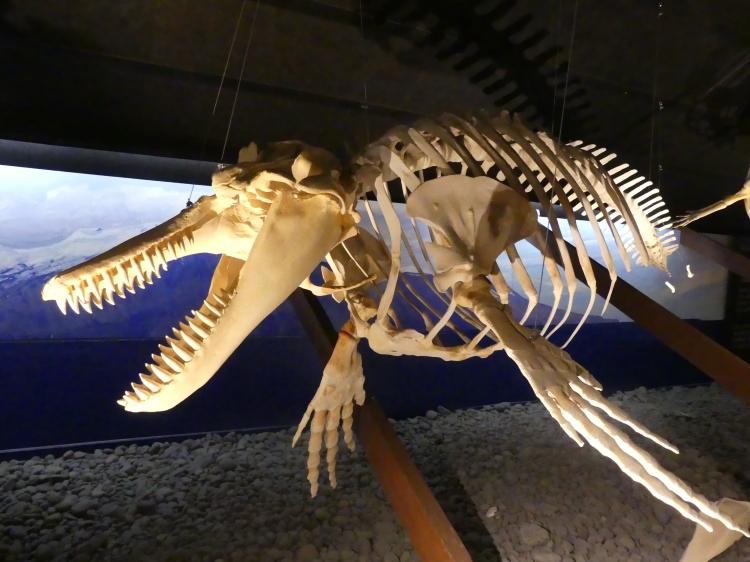squelette-baleine-2