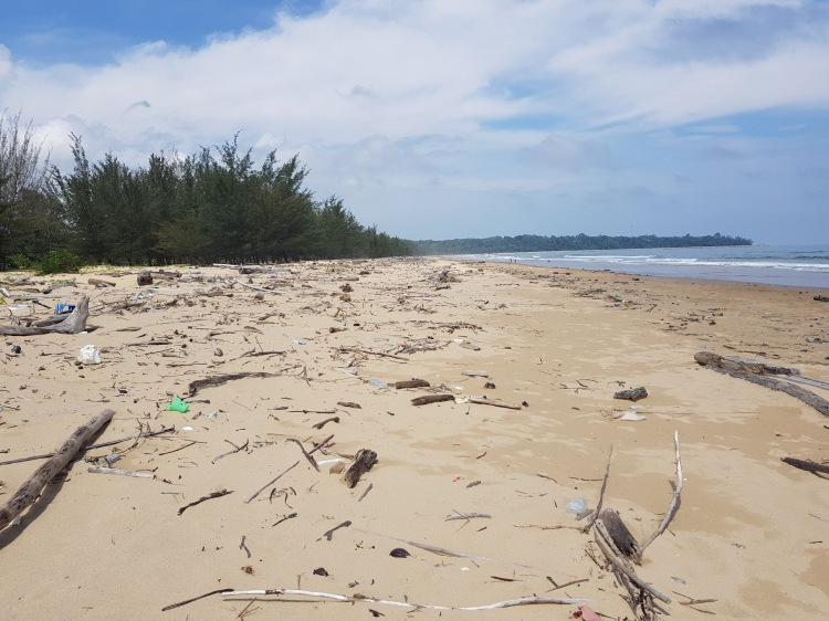 Dechets de la plage.jpg