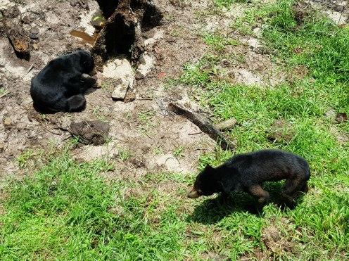 Kuching matang