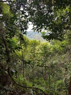 Lambir Hills 20
